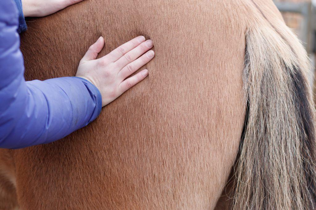 paardenmassage - paarden helpen ontspannen