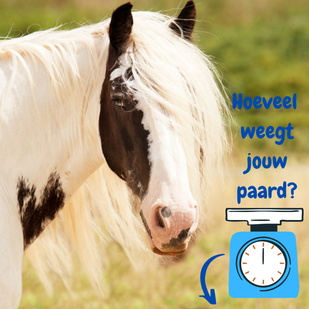 paardenweegschaal-voedingsadviespaard
