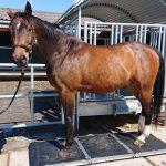 Voedingsadvies Paard - Paardenweegschaal - Paardenmassage